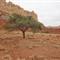 Wet Desert Textures