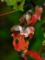 Colors palette,  DSC07335