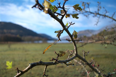 Thorns at Loch Voil