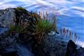 Sitka Alaska Beach