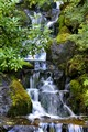 Waterfall, Japenese Garden