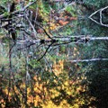 Reflections on Flat Brook - pointalism