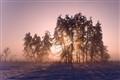 Fog & sun