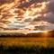 Into the Sun: OLYMPUS DIGITAL CAMERA