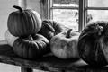 Pumpkins  -  Clumber Park Nottingham