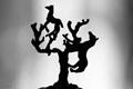 The Elusive Tree Horse