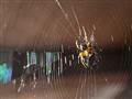 Sunbathing Spider
