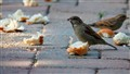 Bread and Sparrows