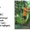 hemsida-jattetuja-383cm-omkrets-stor-kivik-arboretum