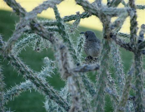 Cactus-Bird