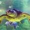 Sea Turtle 2 (adjusted)
