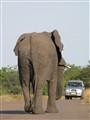 Kruger 2010-4937