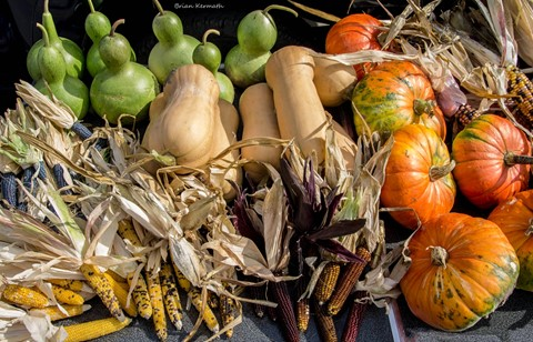 Fall harvest - corn and squash
