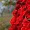1000 poppies3
