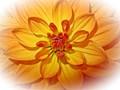 Flower Malvern Show