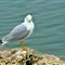 2012-Seagull