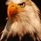 Bald Eagle....