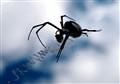 Female Black and Yellow Argiope Spider, Biloxi Mississippi