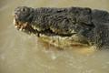 Big old croc, Adelaide River, NT