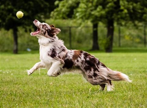 running dog-189