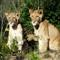 Zulu's cubs