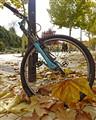Fall bice