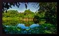 Lake reflection view