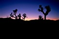 Sunset Joshua Tree CA