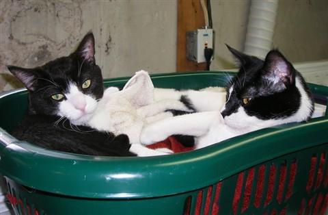 Cat Hot Tub