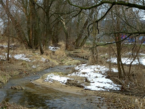 Willow Creek tributary