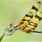 dragonfly 202