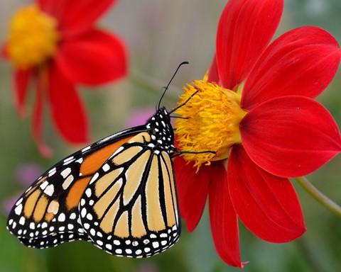 Butterfly#2