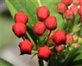 flower_01_small