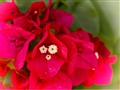 Hot Pink with Dainty Flowers