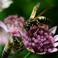 war for honey