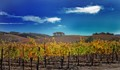 Kunde Vineyards in Early November, California