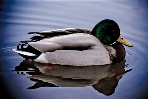 DuckPond-07675