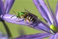 The REAL Green Hornet