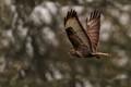 flying elegance!
