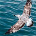 Seagull over Barcelona Harbor