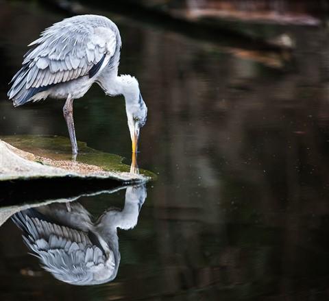 bird_reflection