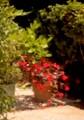 Impressionist Garden