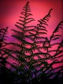 red fern dpreview-1