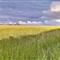 Cornwall Field