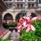 Marienplatz blooms