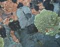 Rock Lichens