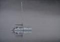 Morning Fog, Southeast Alaska