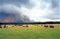 East Fire Buffalo