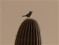 saguaro (1 of 1)