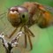 DragonFly_on_a_bicycle2
